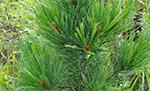 Дивы обсуждают! Декоративный сад: страсти вокруг хвойных и лиственных
