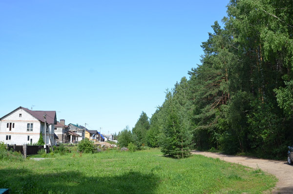 Жители Боровлян борются против вырубки леса и уплотнительной застройки