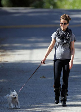http://diva.by/i/photo/news/2012/pregnancy_dog.jpg
